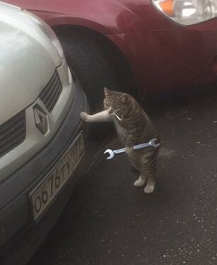 Mechanic Cat